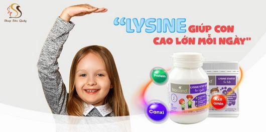 Bổ sung Lysine cho con cao lớn mỗi ngày
